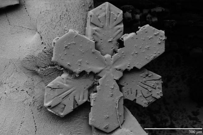Snowflake_300um_LTSEM[1]